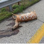 RT @justin_fenton: God help us: people graffiti tagged a dead deer on I-83, pic by @DrRockt0pus #baltimore http://t.co/Q6ZStKOjNA