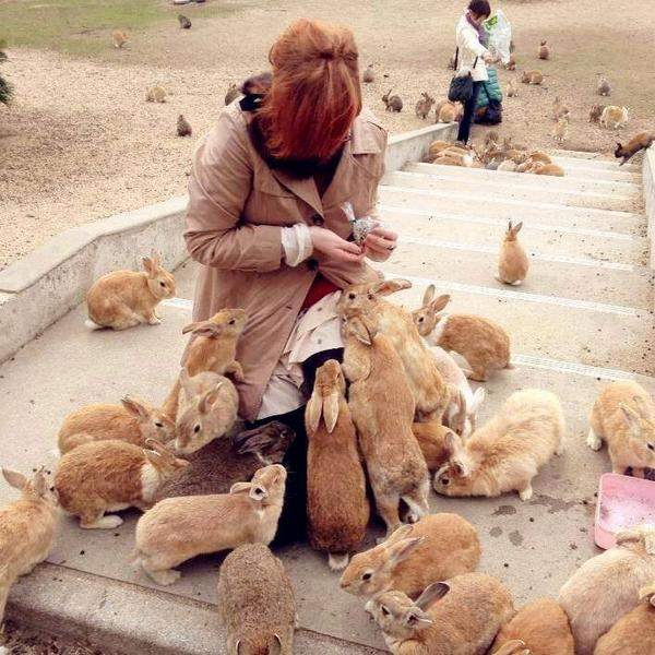 In Japan there is an island called 'Rabbit island' due to the number of rabbits that pass along the streets. http://t.co/XRwEF8jxRV