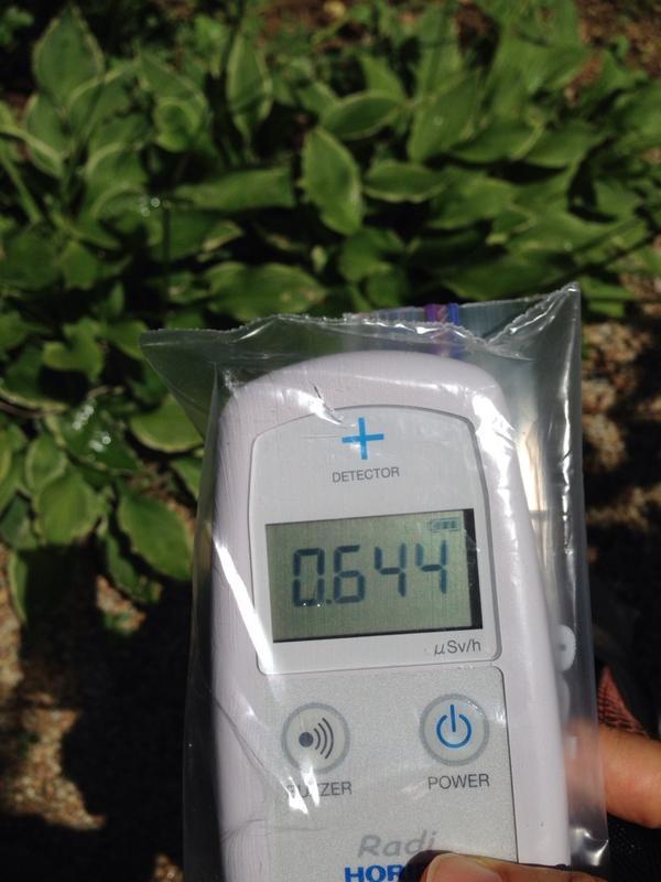昼食を取った福島市内のお店の庭、線量計が軽く0.6を超えます。  横浜だって汚染されているのですが、0.05前後。 12〜13倍の線量です。  人の手がしょっちゅう入っているはずの場所でこうですから、やはり「除染で安全」とはならない。 http://t.co/YdHBHonbw7
