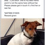 RT @BOSOMWORTH1: Harrogate Advertiser please RT Jack Russell missing off A61 on Tuesday. Near Weeton n Dunkeswick http://t.co/ZSiajfcTuA