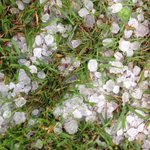 RT @cmorrison_esn Hail- quarter to golf-ball sized- from storm with tornado that blew through around 8:30 http://t.co/aOuFcnxDUD #stormmode