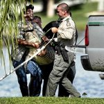 RT @craigtimes: The #Florida program that hires trappers to catch #alligators is called Statewide Nuisance Alligator Program -- SNAP http://t.co/mF28kOvIQj