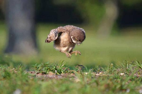 A baby owl learning to fly: http://t.co/FmpZW4hzlL