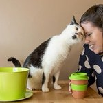 #Melbournes first cat cafe looks pretty pawsome http://t.co/dfTo6Cellm via @tminear http://t.co/kv0WQU6dLJ