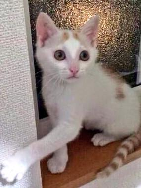 猫飼いたい方おらんかの。前の会社の後輩が保護した。生後3ヶ月くらいのオス。尻尾シマシマでかわいい http://t.co/bz2l0RTJZ0