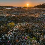 #Repost Boggy Dawn #Newfoundland Peat bog in Bonavista North near Cape Freels. http://t.co/g3DlTVHwvj
