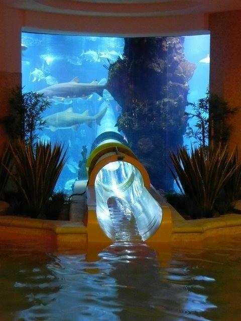 A water slide through an aquarium with sharks! http://t.co/tUuTtOr6zd