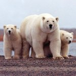 RT @washingtonpost: Scientists are now watching polar bears from space http://t.co/ctRHZeQo26 http://t.co/I0KkuvSunP