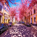 RT @ThatsEarth: Cherry Brick Road, Bonn, Germany http://t.co/raqR1SgOGQ