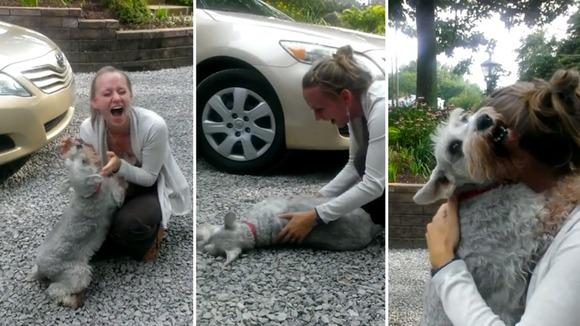 """@itvnews: Dog faints from 'overwhelming joy' after owner returns from two years away http://t.co/ZqBWqx2zqn http://t.co/MZIb40YOJe"" love it"