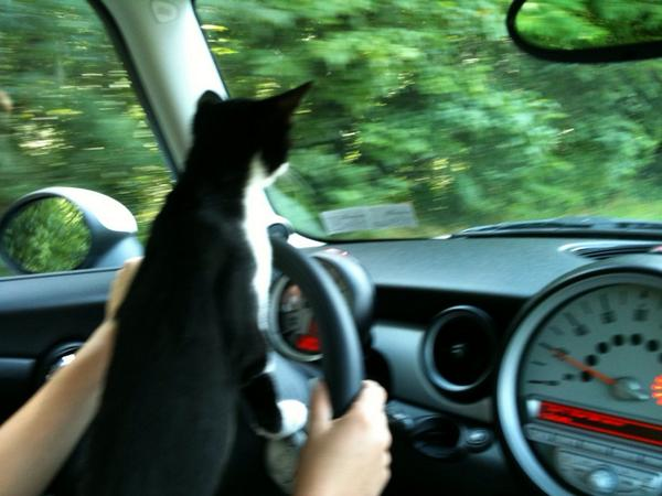 @MINI #MINIunleashed my Cooper likes to drive my mini! http://t.co/FrLX8vEpYu