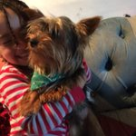 RT: @CLewmac 10 month old yorkie stolen from Odd Down. 3 devastated children. Mr Darcy! https://t.co/Vi6lMkj9nN