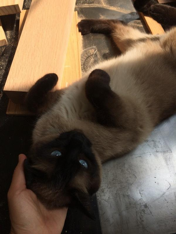 @Favorite__Cat 이렇게 예쁘게 같이 크는데.. ㅜㅠ 우리 목공방에 양가에서 극렬반대한다고 6년 같이 살던 고양이가 가입양(?) 왔어요.  정말 애교 끝내주는 아이인데.. 개도 있고 시끄러운 곳인데.. http://t.co/GPIL35TKic