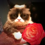 """@RealGrumpyCat: I was on @BacheloretteABC once. It was terrible. #Bachelorette #BacheloretteFinale http://t.co/yHCLcEFV3F"" GC4Bachelorette!"