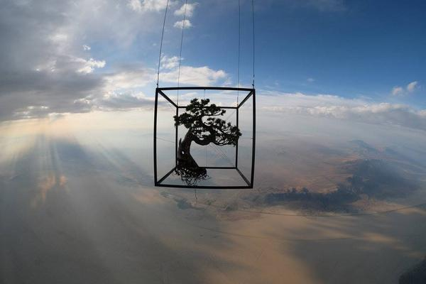A Japanese artist recently launched a Bonsai into space http://t.co/pg2reXlRnW
