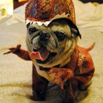 RT @munchanka: Jurassic Bark #DogMovies @midnight http://t.co/03guvZezoy
