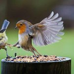 "RT @newvisionwire: ""This is SPARTA!!"" #birdwatching #Uganda #myafrica #BirdsWorld http://t.co/hjdENzOK4E"