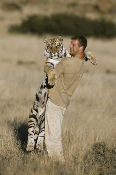 Happy #globaltigerday everyone.  Lets keep up the hard work trying to save this beautiful creature. http://t.co/BDy5R5cQvQ