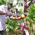 How a family has turned cocoa beans into chocolate: http://t.co/rW2xDPZcPH #Prosper http://t.co/Q3hSKg479p