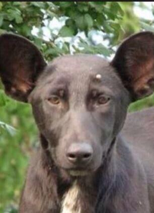 Once again, here's the dog that looks like Vladimir Putin http://t.co/CfZVQZdGkt