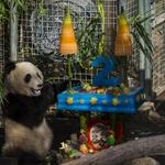 Happy 2nd bday to our little gift, Xiao Liwu. Hes a great ambassador for his species & we couldnt be more proud. http://t.co/JycOFCvQjP