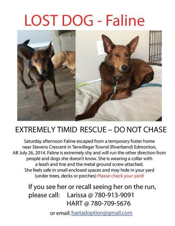 COURTESY POST.... We hope this @HARTedmonton foster dog is found soon. #yeg #yegpet http://t.co/5Ba5G9Fy2D