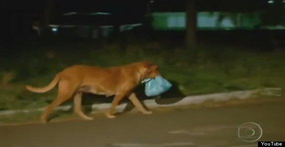 Your Tuesday afternoon cry. Abandoned dog walks miles every day to feed her hungry friends: http://t.co/MoIgxwtapQ http://t.co/J3FMbZ9h8z