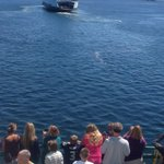 RT @Van_Bad: @wsferries Ferry Sealth pulling ferry Tacoma away from shore. http://t.co/gRcidYiEbX