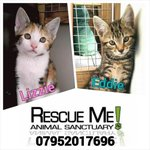 RT @rescuemeanimal: Pls share! Still not a single call for these 2 kittens :( #Liverpool #cats #RescueMe @JuiceFM @WaltonValeV4P http://t.co/xTCtRVHqlD