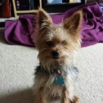 RT @dadofJaz Help find my siss missing dog in #Bowness? Hanks his name http://t.co/lQ6qwZ6ivQ @YYCLostPet @PetRecoveryYYC #yyc