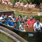 New River Safari Cruise launched http://t.co/8iC0Ig9wSI http://t.co/BLPYf8QFiI