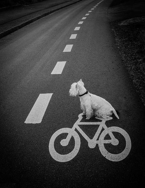Clever pup! http://t.co/J5CLfgx40W