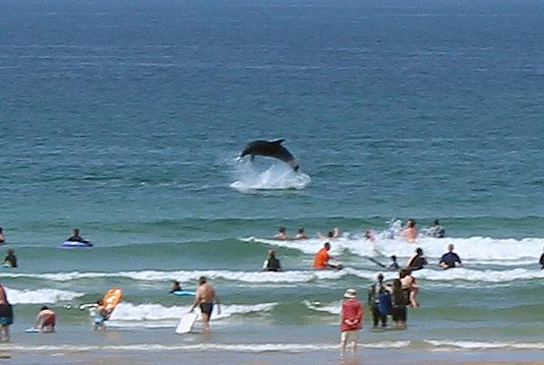 Lucky beach-goers in #Cornwall were treated to an amazing air display by dolphins http://t.co/GCHcoo1U9P @ak_cruises http://t.co/C2jdeAooOS