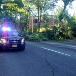 RT @MikeKATU: Police: at least 1 hour before crews can remove fallen tree near PSU. Caruthers closed between 1st & 4th #LiveOnK2 http://t.co/MIBUBlIAKk