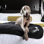 Via #MakeVegasYours: Pamper Your Pup at These Fido-Friendly #Vegas Hotels http://t.co/m27sE3fsxk http://t.co/nZL1V2155t