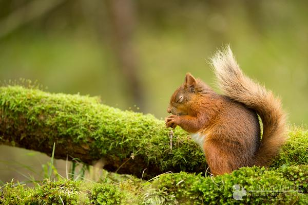 This red squirrel is just PRAYING you'll #VoteForBob to get nature on the political agenda. http://t.co/1zghoc2iUl http://t.co/xEwc1EcQhv