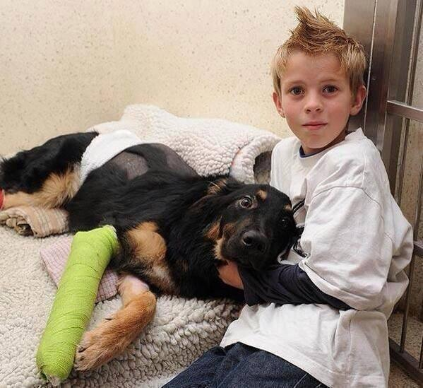A 7 months old puppy named Geo pushed a 10 year old boy out of the way of oncoming truck and took the impact himself. http://t.co/qz9NvOTH7l