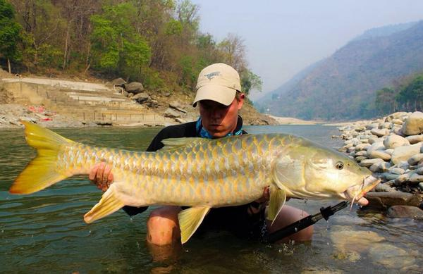 """@NakedFisher: We caught this Indian Yellow Fish or 'Mahseer' on fly! @FlyandFin @FlyFishFans @flyfishmagazine http://t.co/YIUfgp7m4h"""