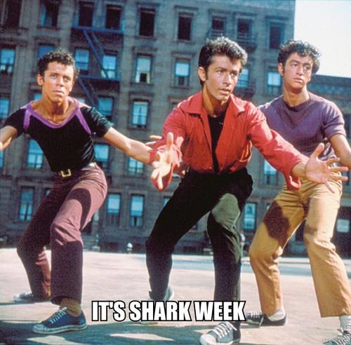 Happy Shark Week! This is what @Discovery meant, right? #SharkWeek http://t.co/jDYqQAnIv7
