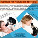 Wetnose Day Sept 26th - Pet Makeover #competition. Please get involved! #petbizuk #dogs Thanks to volunteers! http://t.co/iLlTUXemot