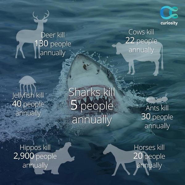 Keep these facts handy during #SharkWeek. http://t.co/LVv6qQ2nCe