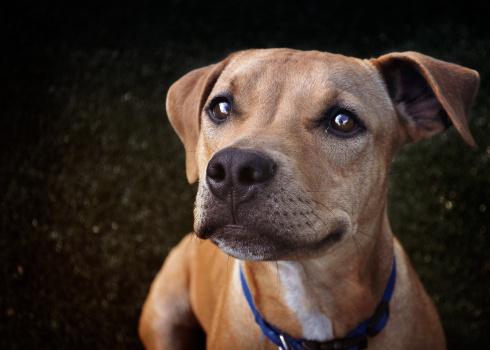 #Adoptar un perrito es un acto de cariño que te traerá muchas recompensas. <3 :D http://t.co/zgWB1aqAvb