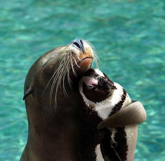 Just a seal hugging a penguin: http://t.co/ZS2HLv4n4A