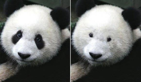 This is what a Panda looks like without eye makeup. http://t.co/vfwm9EUCuM