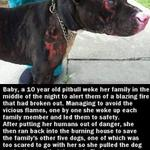 RT @RealTouchingPic: Dogs are family, and Baby is and incredible hero http://t.co/tQmC9n5j9Y