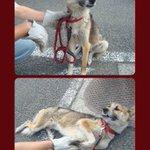 期限延長26日に❗@rescue_hope0: 飼い主引越しで置き去り!虐待の可能性も…とても優しく大人しい男の子。人に裏切られたけど人は大好き。http://t.co/aV57Wwy4JN #熊本県 #犬 #里親募集 #拡散希望 http://t.co/sXH1fDLc4b