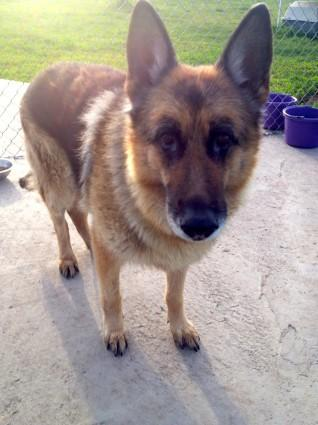 Please RT Jedd's photo, lets find his family. Found between #morinville #stalbert #ab http://t.co/BaJluoE1dZ http://t.co/e9GoBIQRp5