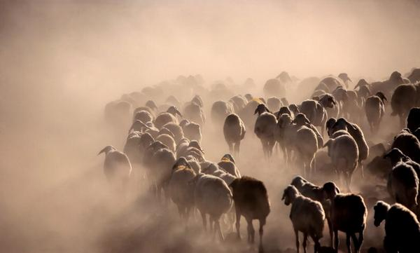 "Herd by barkhan #Photography http://t.co/CQ1s1E7d1W"" Very nice...