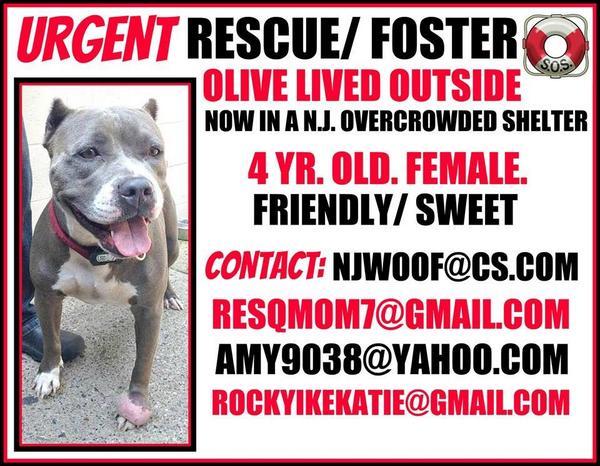 NJ. Save Olive!!! http://t.co/oSYFg6PvJz