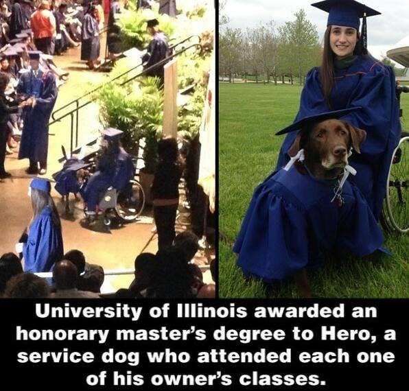 This dog was awarded an honorary master's degree. http://t.co/ANarjXOSoE